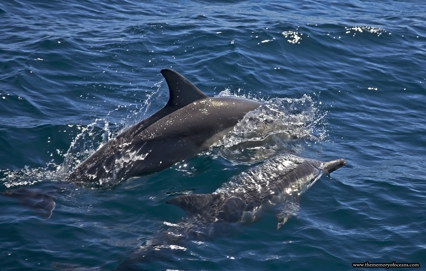 Dolphin-pic-for-web-page