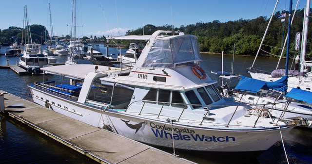 Coolangatta-Whale-Watch-Boat
